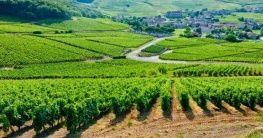 Landschaft im Burgund