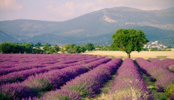 Von den Alpen zur Côte d'Azur